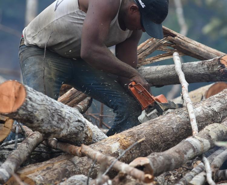 Resultado de imagem para Porquê o desmatamento da Amazônia pode prejudicar o ecossistema mundial