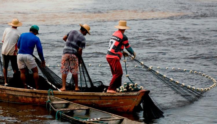 Resultado de imagem para pesca da amazonia