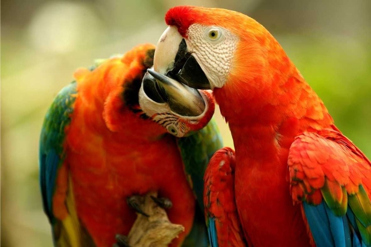 No Dia dos Namorados, conheça animais da Amazônia que são fiéis até a morte